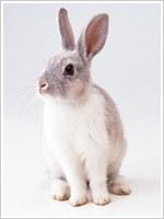 『多頭飼育について』         No.22 2010.3月
