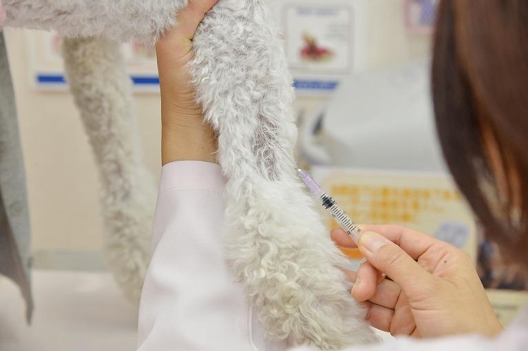 混合ワクチン接種の重要性